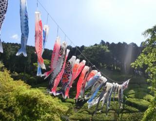 13.4.28姫の沢公園「花まつり」②