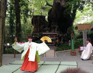 14.5.5平成26年度来宮神社大楠祭②